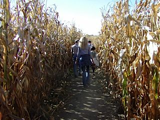 Lost in a corn maze